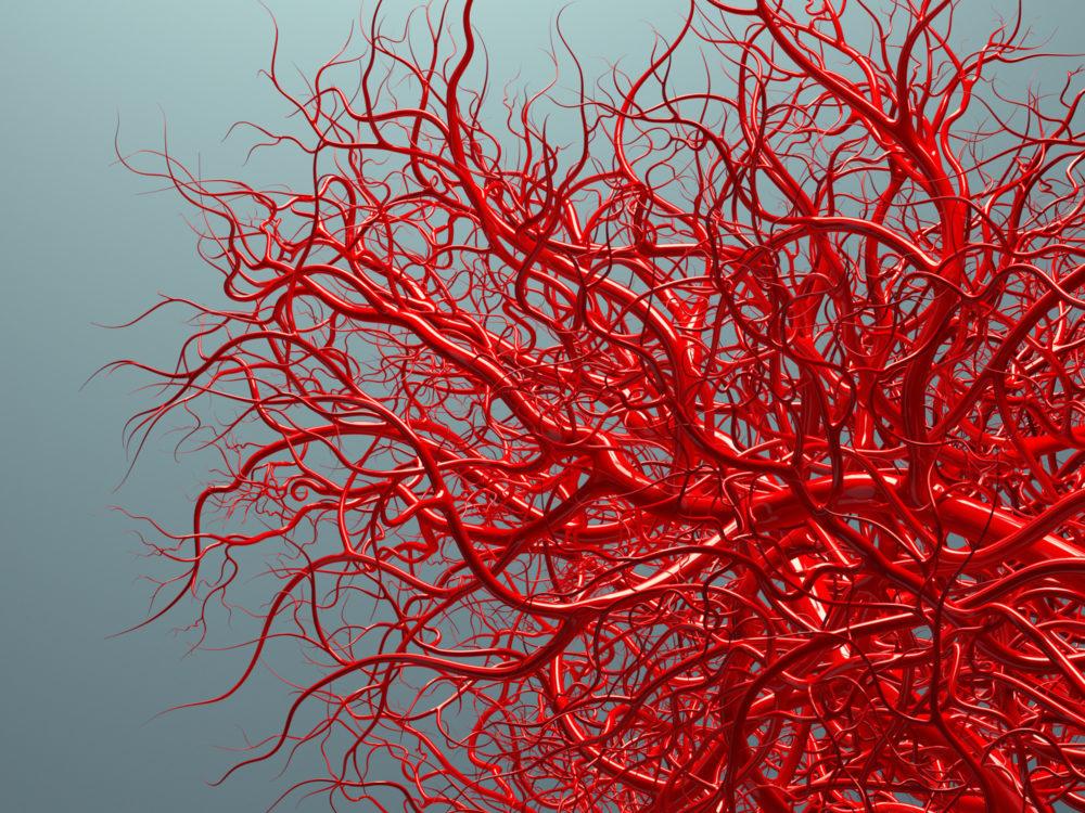bloedvaten